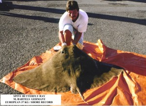 spinny-butterfly-ray-l (1)